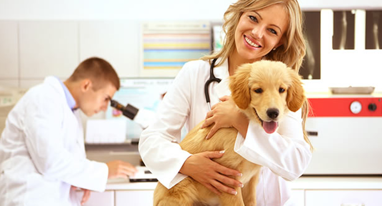 Image result for pet clinic